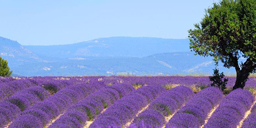 provence-trip